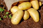 각광받는 다이어트 식품 감자