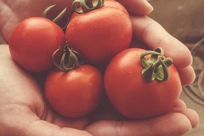 건강식품 토마토